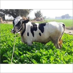 Dairy farm directory
